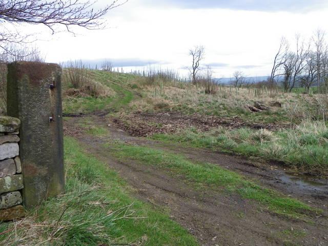 Post, Warrener Wood