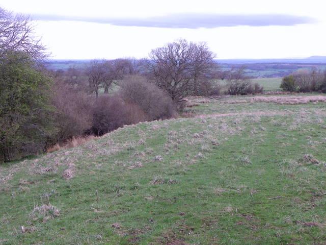 Rough grassland near Ilton