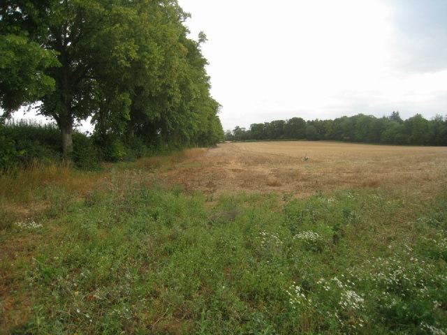 Harvested field - Oakley
