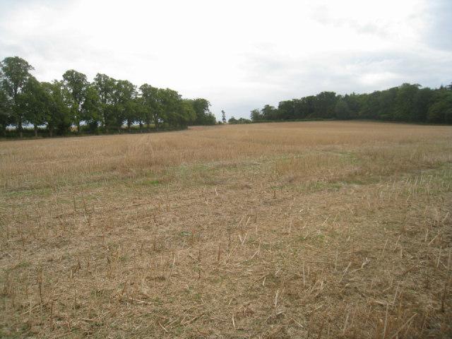 No more wheat