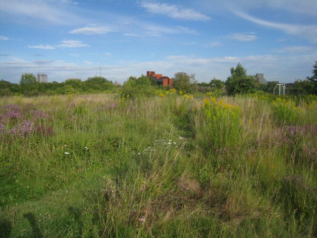 Open space - Basingstoke