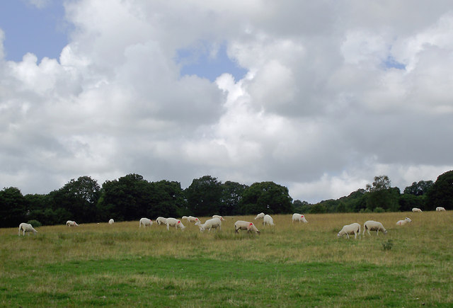 Grazing near Llangybi, Ceredigion
