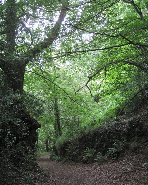 Woods south of Tuckenhay