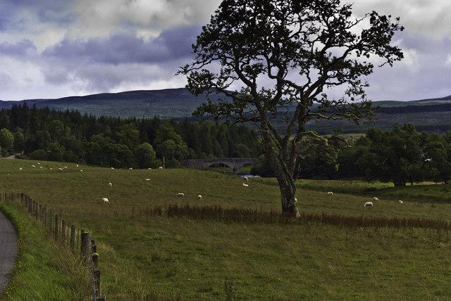 Tree, Bridge and Sheep