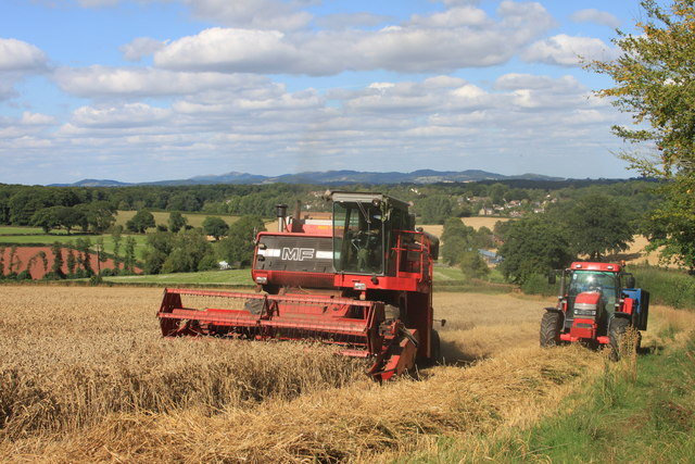 Combining at Linton Hill