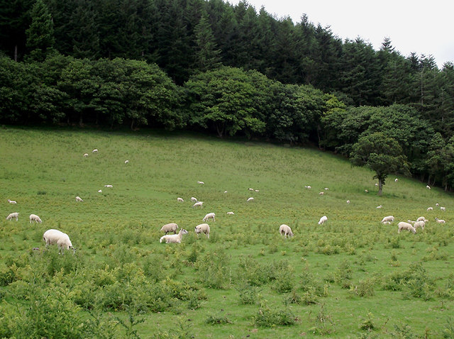 Pasture and forest north-east of Llangybi, Ceredigion