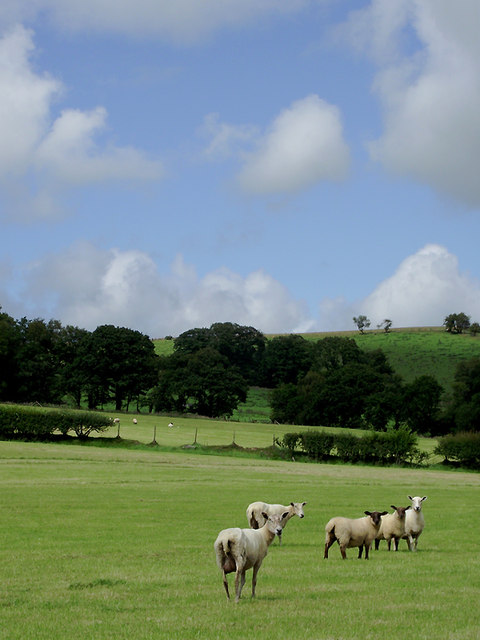 Farmland north-east of Llangybi, Ceredigion