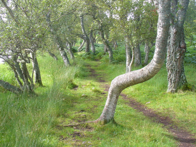 Loch Kinord Trail