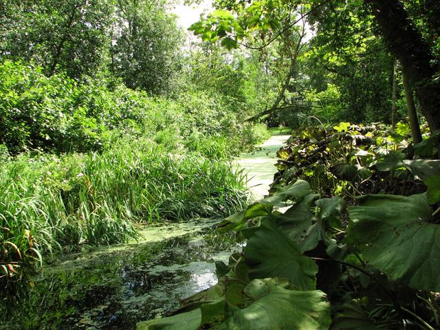 Water channel in Fairhaven Water Garden, South Walsham