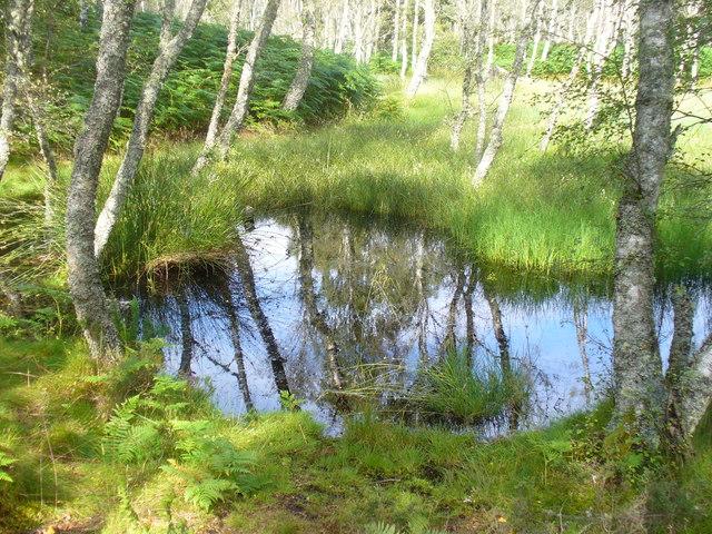 Pool in Parkin's Moss
