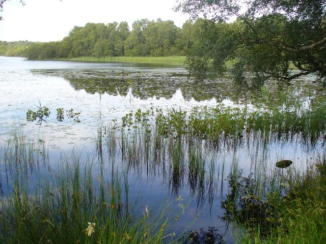 Reedy Corner of Loch Kinord