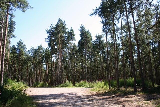 Blackstob Wood