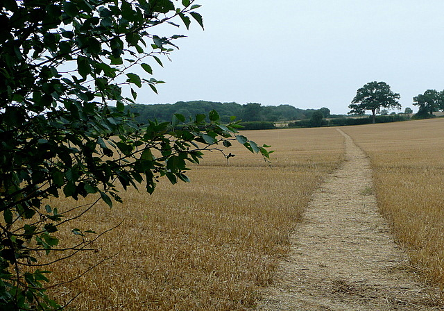 Footpath to Long Lane