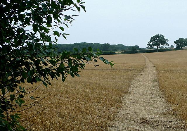 Footpath to Long Lane