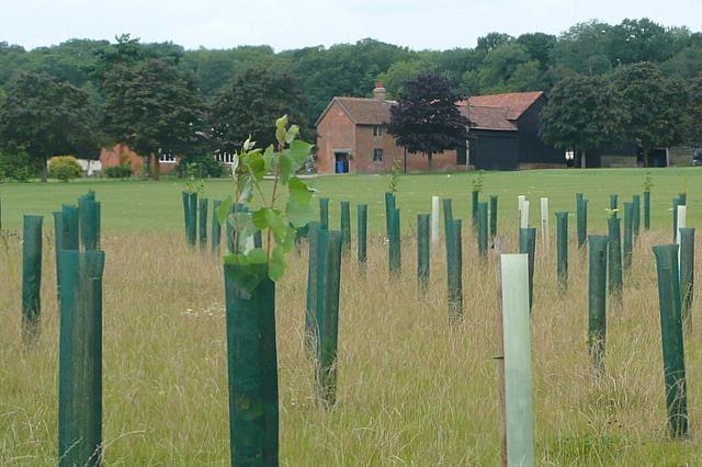 Towards Park Farm