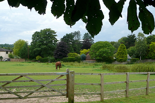 Horse chestnut and chestnut horse