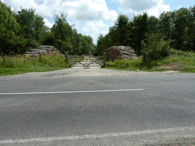 Log piles on the Goodwood Estate