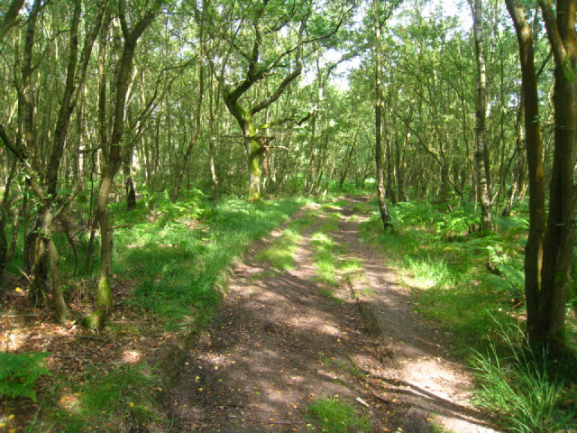 Byway on Bucklebury Common