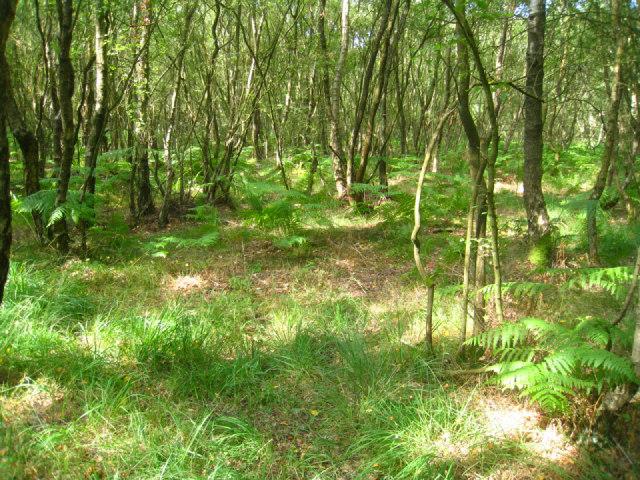 Typical Bucklebury Common scene