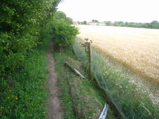 Overgrown footpath - Oakley