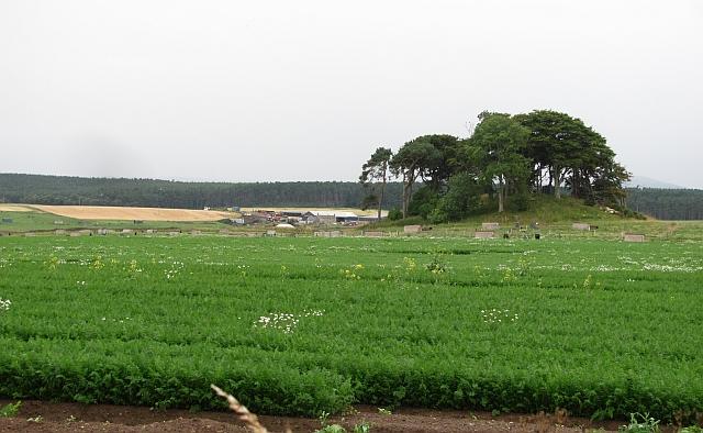 Sandy soil agriculture