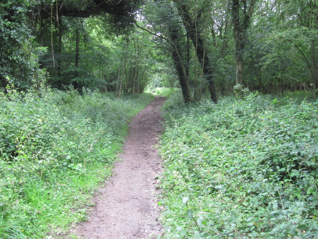 Footpath in Eartham Wood