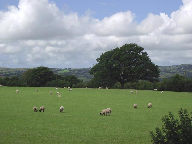 Pasture east of Llwyn-y-Groes, Ceredigion