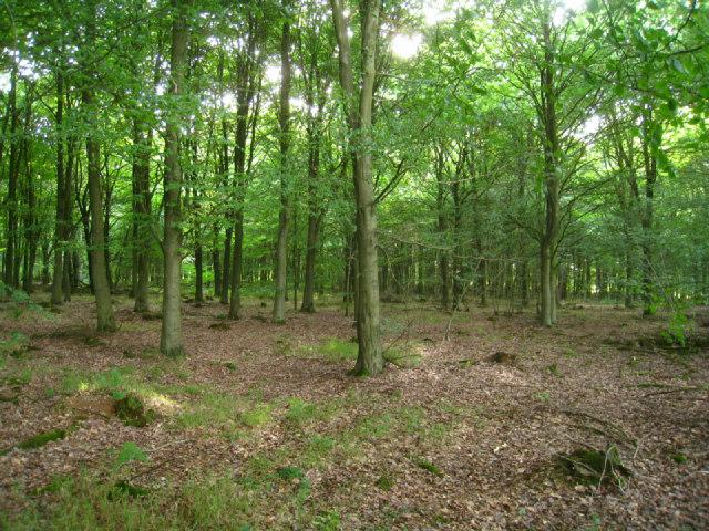 Inside South Wood