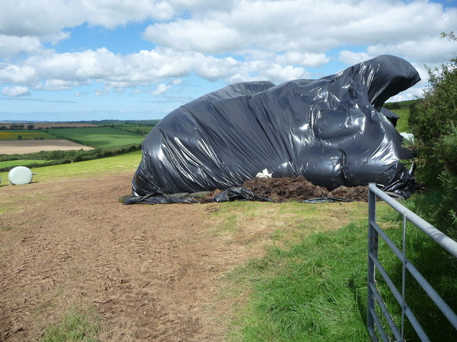 Silage or haylage storage in a field near Upper North Hill farm