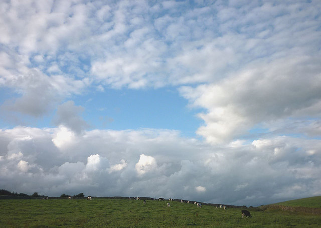 Cows near Gressingham