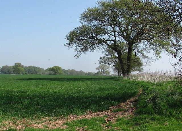Arable land near Ashfield