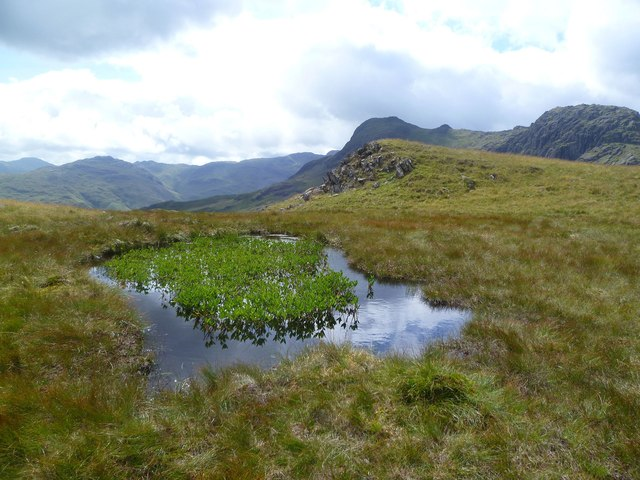 Tarn with Bogbean
