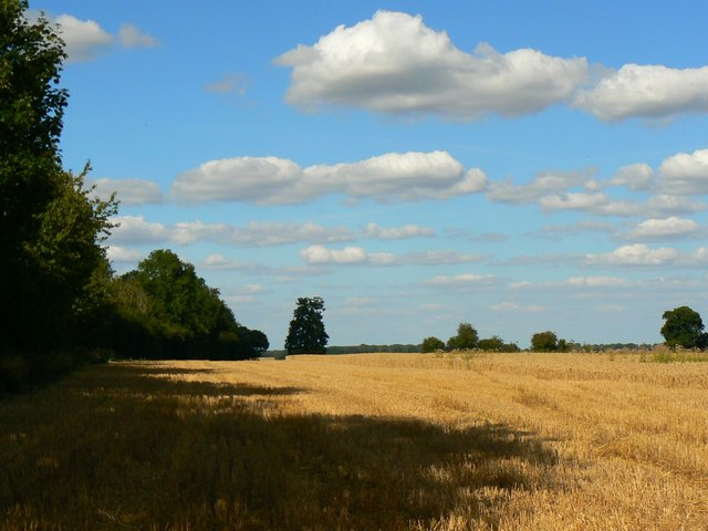 Another view of a wheatfield near Wickfield Farm, Shefford Woodlands
