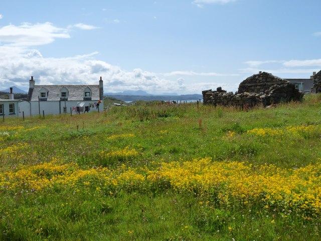 Colourful meadows at Blairmore