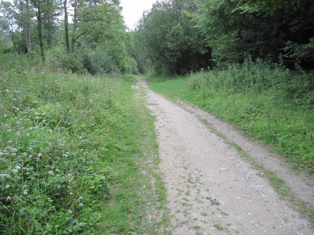 Footpath in Houghton Forest