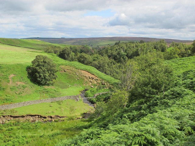 The cleugh of Espy Sike west of Steelcrags Wood