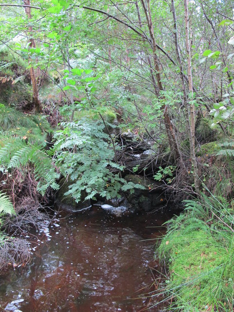 Tributary of Devil's Water at the western end of Steelcrags Wood