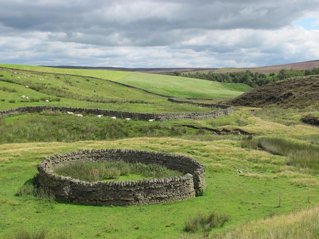 Sheepfold in the cleugh of Espy Sike below Harwood Shield (2)