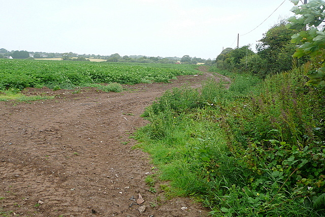 Arable land at Gitchell Lane
