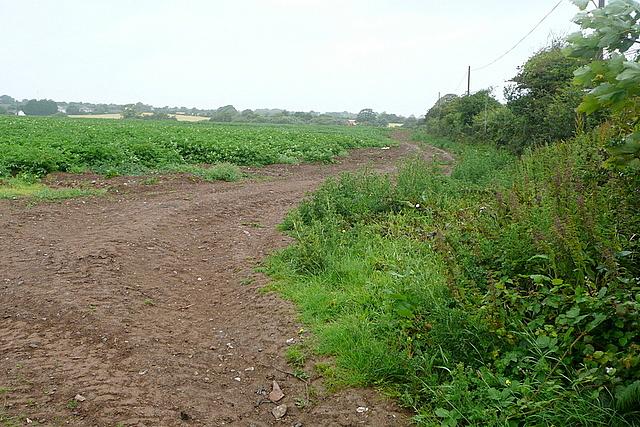Arable land at Gitchell Lane