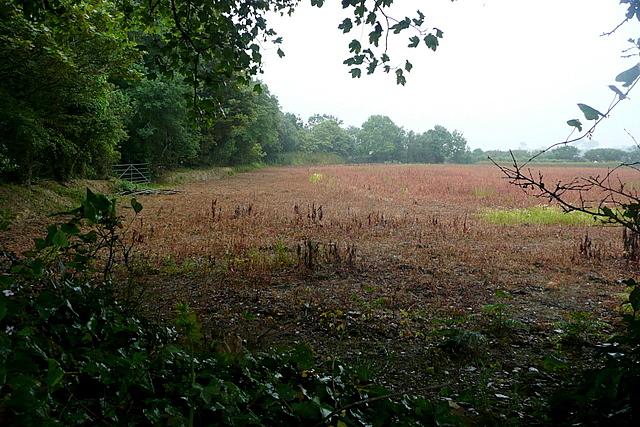 Farmland at Rosevidney