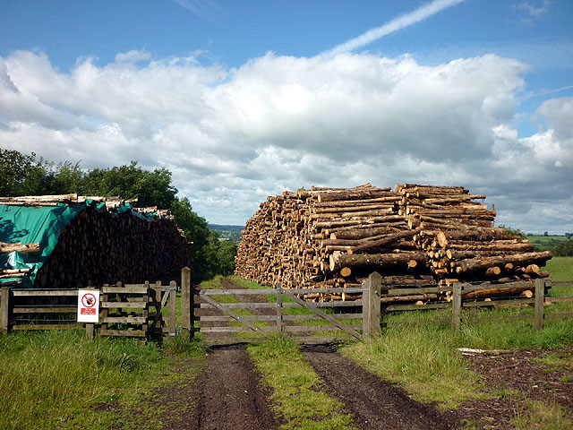 Log piles by the A59, Chatburn Road