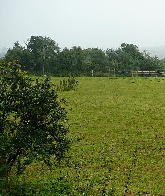 Pasture at Rosevidney Farm