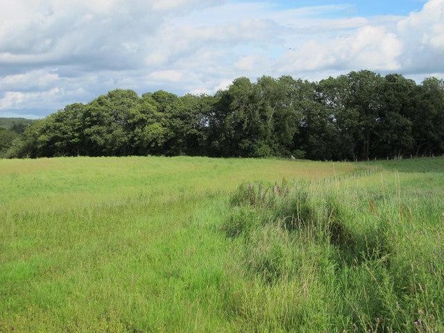 Farmland west of Strothers Wood