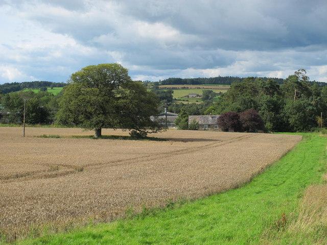 Farmland south of Newbiggin House Farm