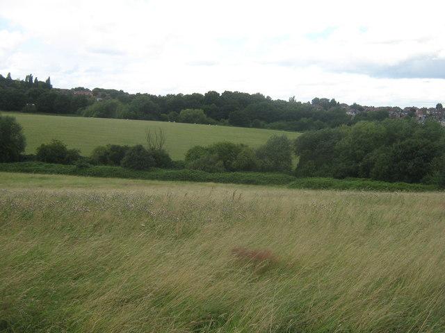 Fields of Woodland Farm