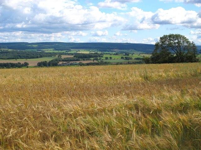 Farmland north of Birks