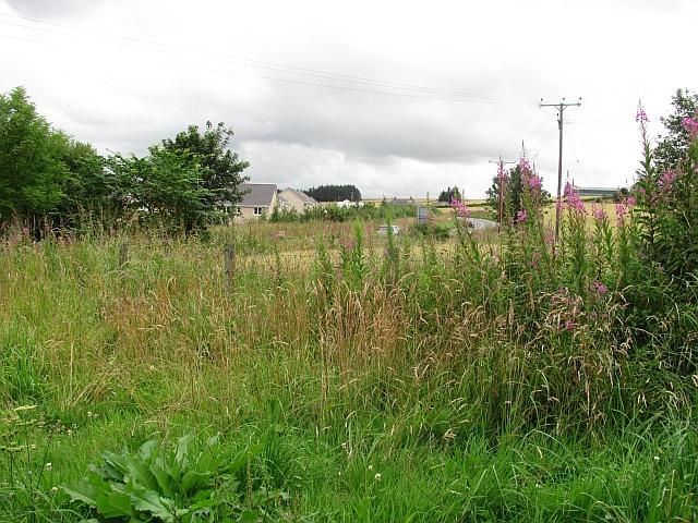 Hedgerow near Inverurie