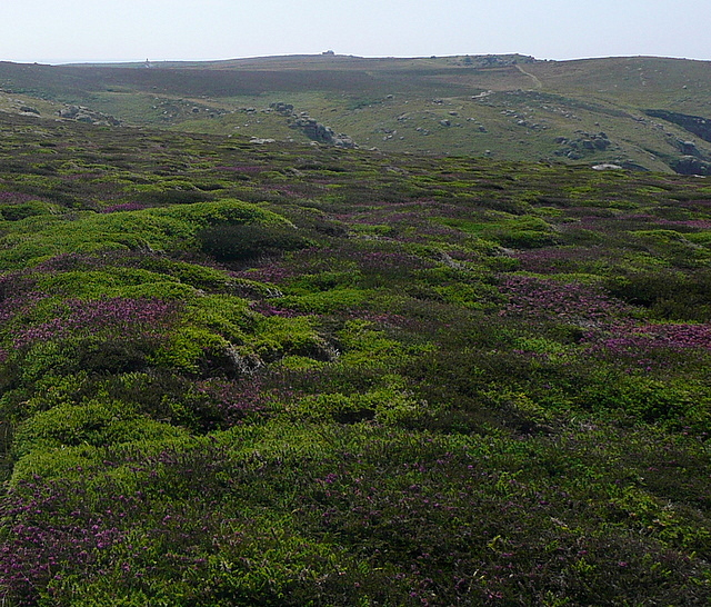 Heather on Higher Bosistow Cliffs