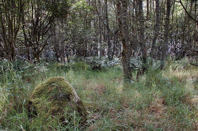 Site of ancient settlement, Camp Wood